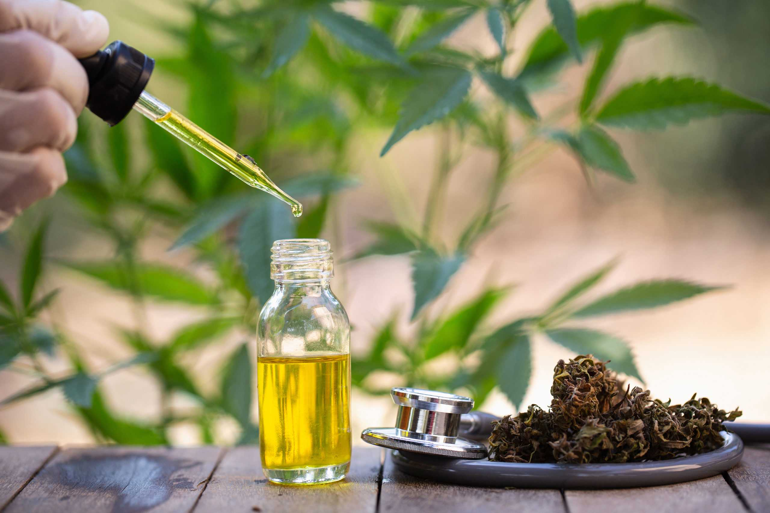 Organic CBD Oil from Hemp