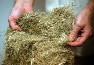 raw hemp